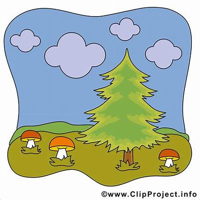 Clipart Wald Herbst Pilze Kostenlos Cliparts Funghi