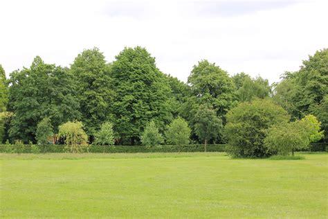 manchester celebrates national tree week quays news