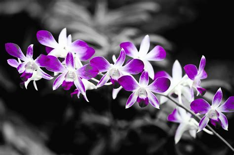 Sind Schwarz Und Weiß Farben by Schwarz Weiss Farbe 5 Foto Bild Pflanzen Pilze