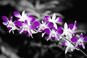 Schwarz Weiß Bilder Mit Farbeffekt Kaufen : schwarz weiss farbe 5 foto bild pflanzen pilze flechten bl ten kleinpflanzen ~ Bigdaddyawards.com Haus und Dekorationen