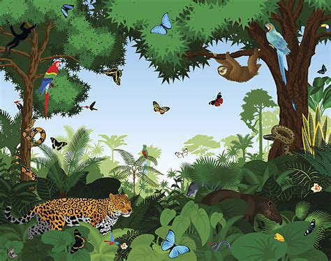 Rainforest Clipart Jungle Clipart Rainforest Pencil And In Color