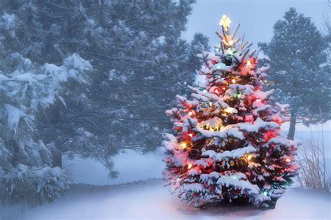 egg christmas tree snow holly harbor know