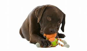 top 15 best cheap chew toys for dogs under 10 2016 With the best dog toys for dogs who chew