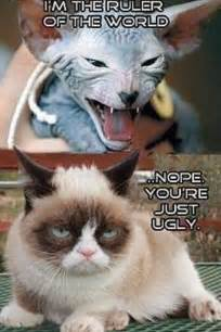 hairless cat meme grumpy cat on hairless cat grumpy cat cats