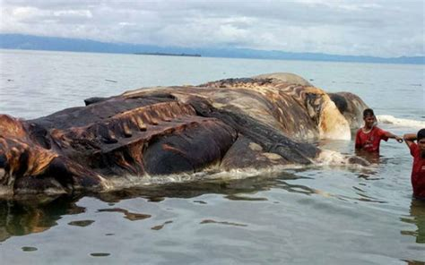 This Giant-sized Dead Sea creature washed up on an Island is freaking everyone on the Internet ...