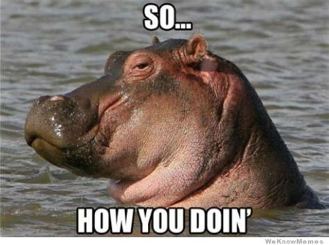 Hippo Meme - quotes how you doin