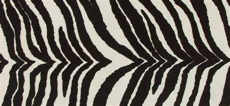 zebra print wallpapers bedroom hd desktop wallpapers  hd