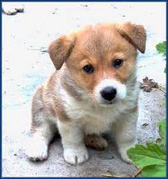 Small Cute Puppy Dog Breeds