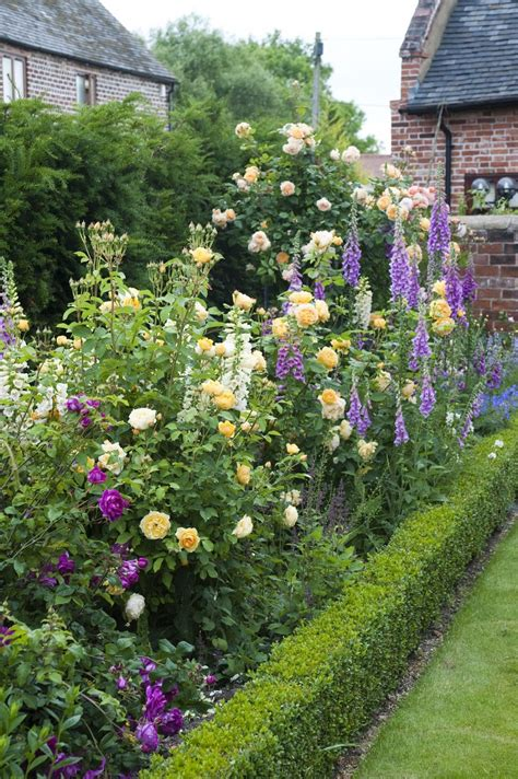 english roses      loved high performance