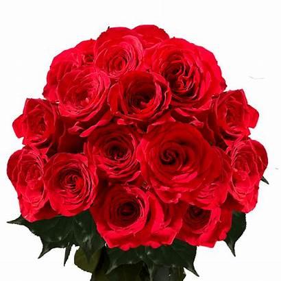 Roses Dozen Valentine Bouquets Delivery Bulk Globalrose