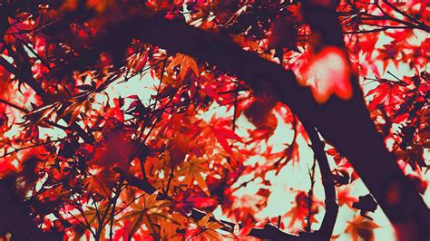 wallpaper  desktop laptop mx fall tree leaf autumn