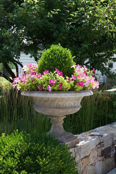 planter ideas beautiful boxwood and petunia planter garden pinterest gardens beautiful and container
