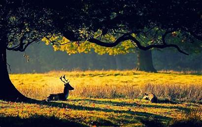 Forest Deer Sunset Nature Wild Sweet Dual