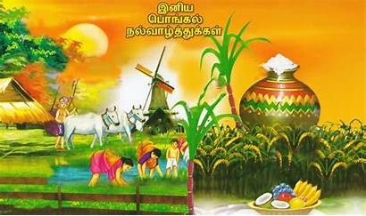 Pongal Tamil Happy Greetings Wishes Wallpapers Festival
