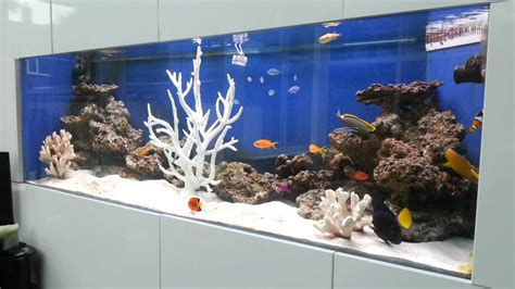 Saltwater Fish Only Aquarium With Tangs, Angelfish, Clown. Kitchen Tile Designs Ideas. Vintage Kitchen Ideas. Kitchen Ideas White Cabinets. Kitchen Island Vent Hoods. Small Country Kitchen Decorating Ideas. Dream Kitchen Ideas. Images Of Modern White Kitchens. Unfinished Kitchen Island With Seating