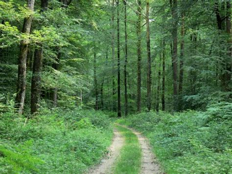 chambres d hotes le mans forêt de bercé 6 images de qualité en haute définition