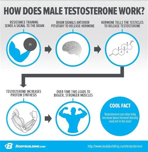 test  testosterone levels  home top