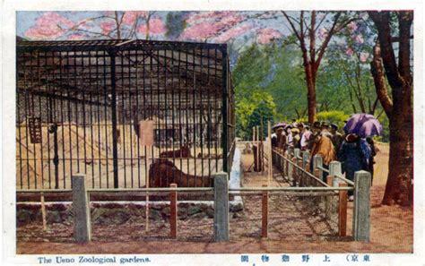 Zoological Garden Ueno Zoological Garden Ueno Park Old Tokyo