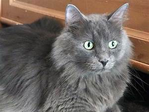 Help Find A New Home For Junior APA39s Dashing Russian