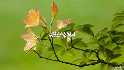 Wahab Abdal Names Compose Urdu Meaning Arabic