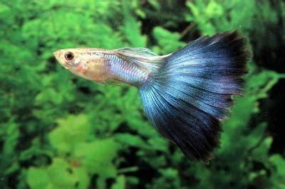 choose   pet fish types  information  subject