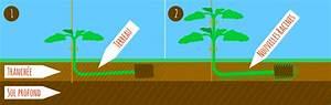 Quand Planter Les Tomates Cerises : tomate semer repiquer planter entretenir avec jaime ~ Farleysfitness.com Idées de Décoration
