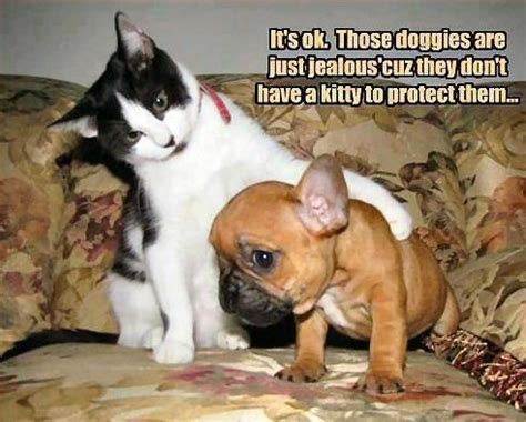 view  funny animal pictures  captions