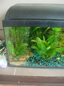 Aquarium Pflanzen Schnellwachsend : anf ngerfragen zu neu eingerichtetem aquarium aquaristik forum aquaristik ~ Frokenaadalensverden.com Haus und Dekorationen