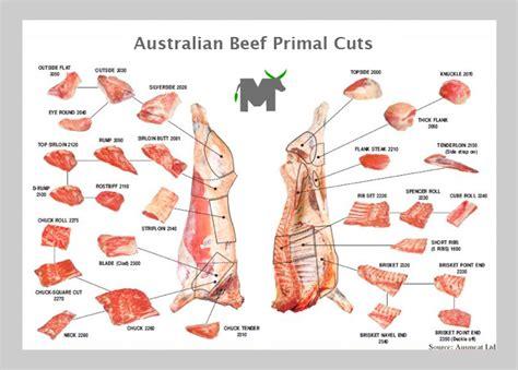 cuts of beef chart simple green frugal co op butchering