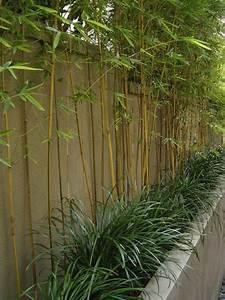 Bambou A Planter : comment planter des bambous dans son jardin ~ Premium-room.com Idées de Décoration