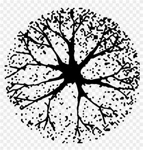 Tree, In, Plan, Png, For, Kids, -, Tree, Plan, Silhouette, Png, Clipart, 5119606