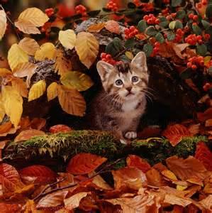 Autumn Leaves and Kitten