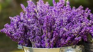 Lavendel Im Topf überwintern : lavendel pflanzen vermehren berwintern trocknen so geht 39 s ~ Frokenaadalensverden.com Haus und Dekorationen