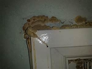 champignon mur exterieur maison avie home With traiter l humidite dans une maison