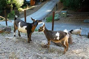 The Goat Pasture Fence…That Almost Wasn't | Curbstone Valley