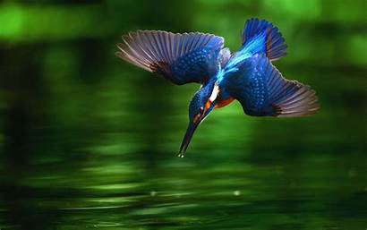 Birds Background Wallpapers Wall 1920