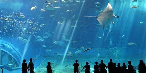 le plus grand aquarium de 4 superbes aquariums pour des balades sous marines