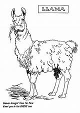 Llama Coloring Lama Printable Kolorowanki Circus Dzieci Dla Ausmalbilder Bestcoloringpagesforkids Animal Llamas Cartoon Drawing Momjunction Zoo sketch template
