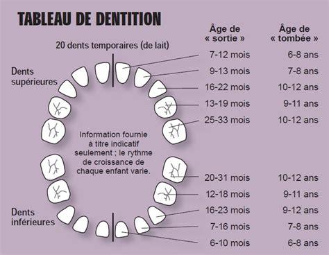 les dents et leur num 233 rotation antis 232 ches de consultation en m 233 decine g 233 n 233 rale