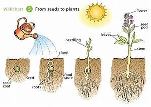 Kanterman  Elyssa    Seed To Plant