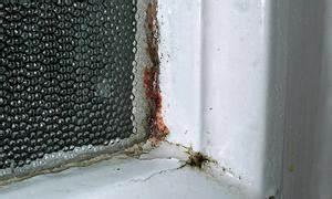 Schwarzer Schimmel Wie Entfernen Mauerwerk : schimmel in der wohnung ~ Michelbontemps.com Haus und Dekorationen
