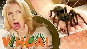 TARANTULAS CRAWL ON OUR FACE?! (Whoa! Nature Show) - YouTube