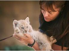 Baby Lynx at Point Defiance Zoo South Sound Magazine