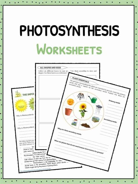 photosynthesis facts information worksheets for kids