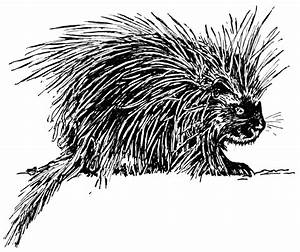 Porcupine Drawing | www.imgkid.com - The Image Kid Has It!