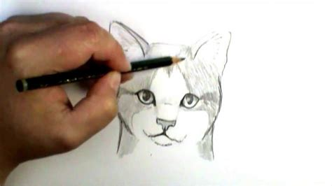 draw  cat face youtube