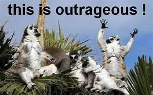 Pin by Sarah Ne... Cute Lemur Quotes