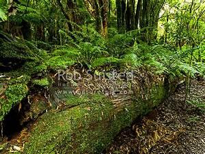 Fallen Rimu tre... Forest Floor Quotes