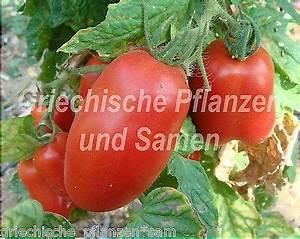 Tomaten Balkon Kübel : tomate scatolone 2 flaschen tomaten riesenf chte 10 frische samen balkon k bel eur 1 25 ~ Yasmunasinghe.com Haus und Dekorationen