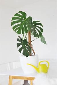 Die besten zimmerpflanzen die besten zimmerpflanzen f r for Die besten zimmerpflanzen
